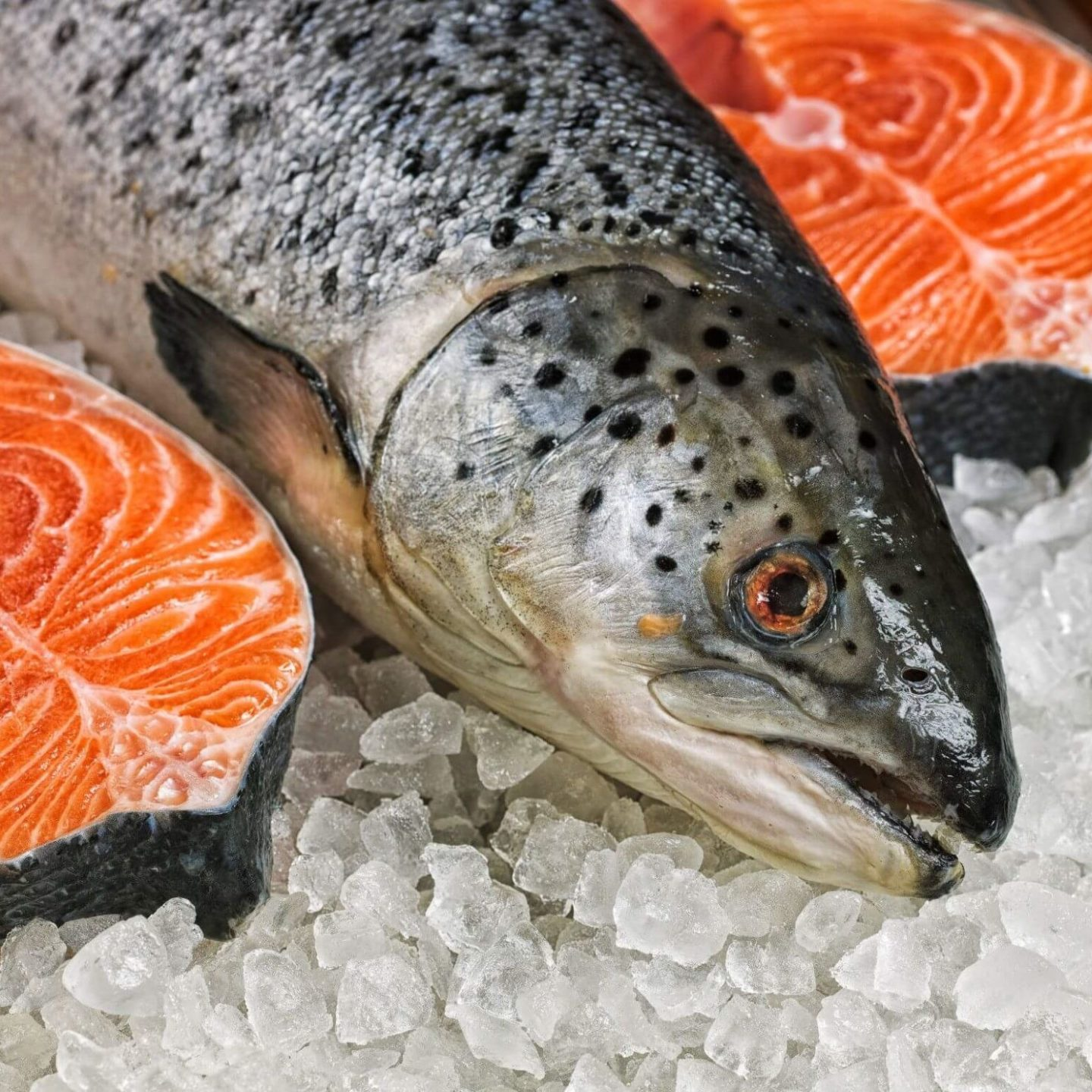 Fish resting on ice - Tips on Making Sure Your Fish Is Real | NSF International