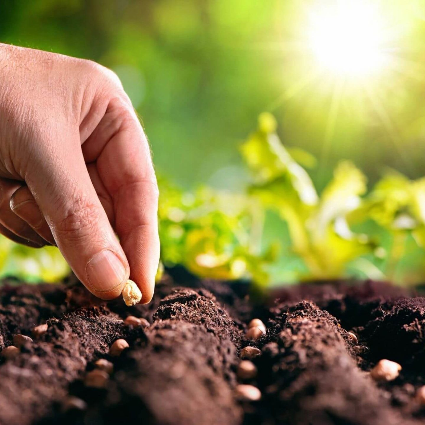Person planting seed on earth - Everything You Need to Know About Starting a Vegetable Garden | NSF International