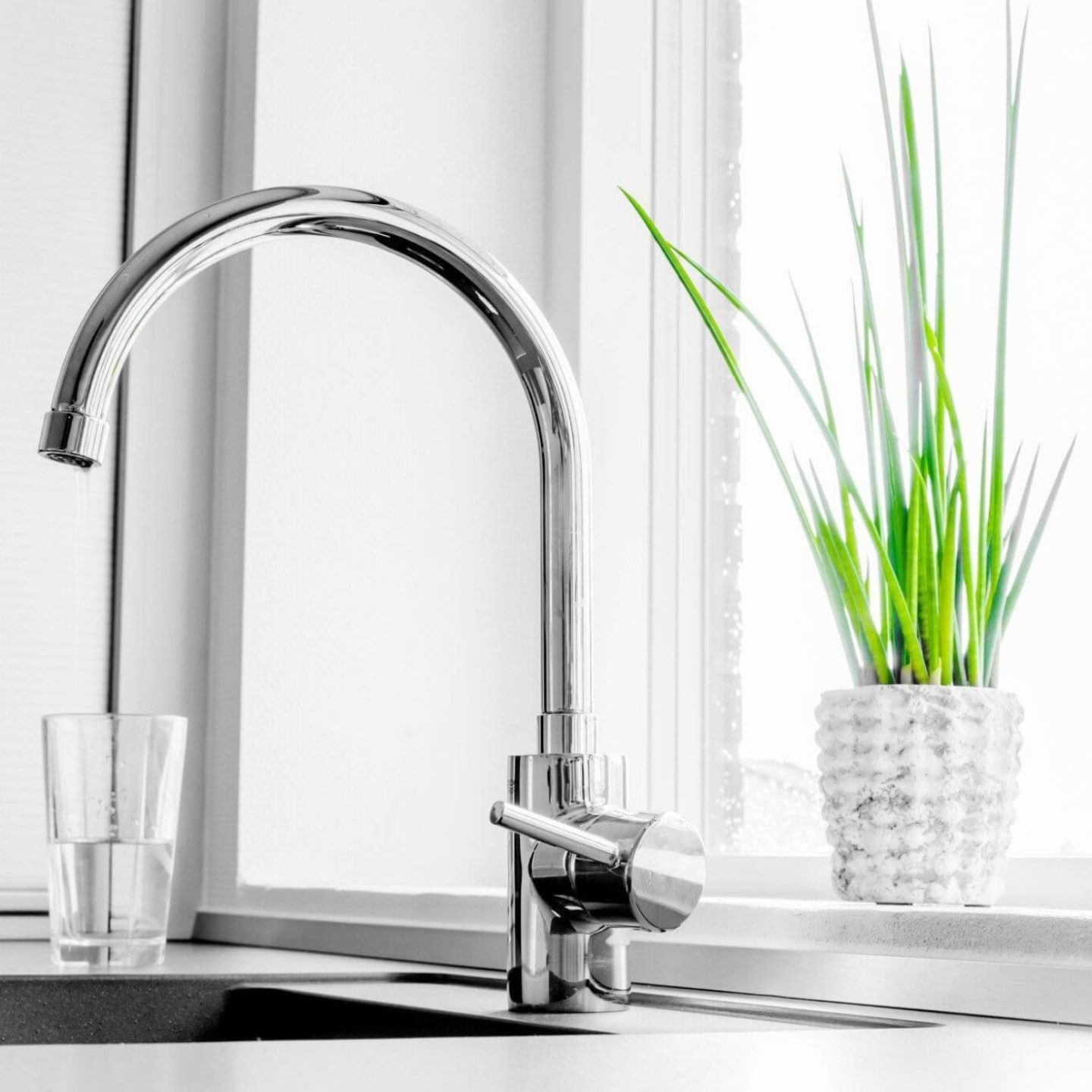 Kitchen faucet water cup and plant