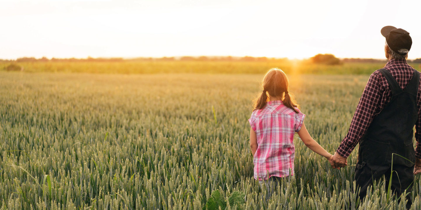 Farmer showing to his granddaughter a wheat field, holding hands