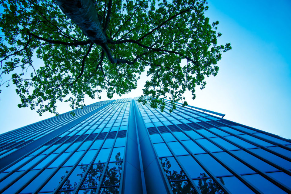Looking up at a tall building and tree