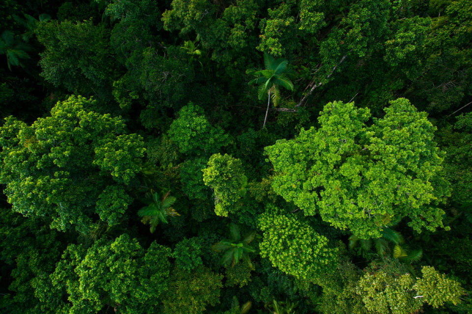 Ariel view of Forest - Forest Management Certification   NSF International