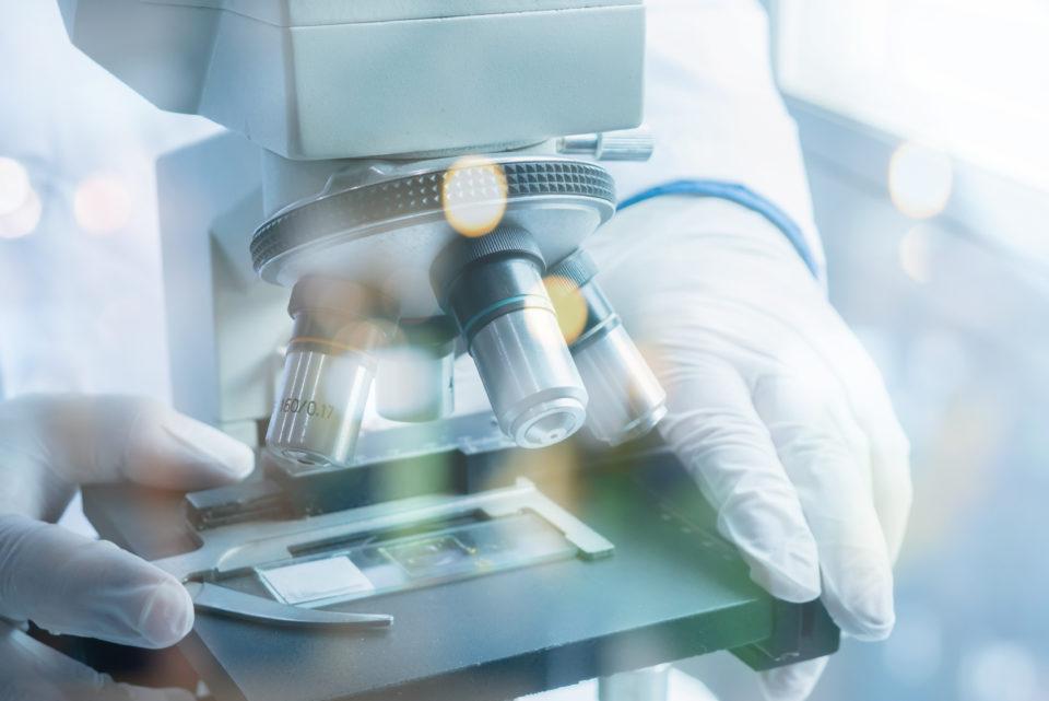 Slide being viewed on microscope