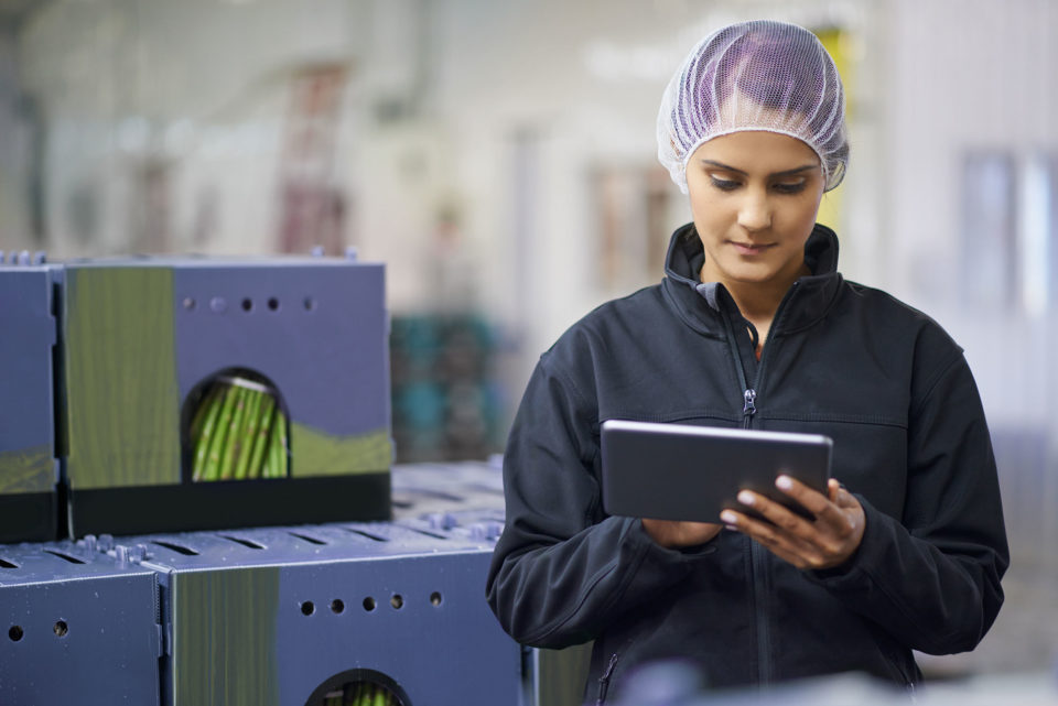 A woman using a tablet in an asparagus warehouse
